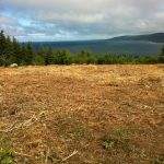 C.D. Blue Forestry - Lot Clearing and Mulching